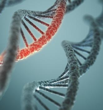 Maatschappelijke dialoog over aanpassen embryo's gestart
